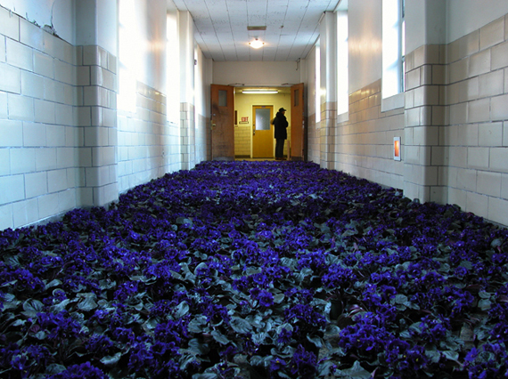 "bloom ""mental hospital"" flowers exhibit colossal ""Anna Schuleit"""