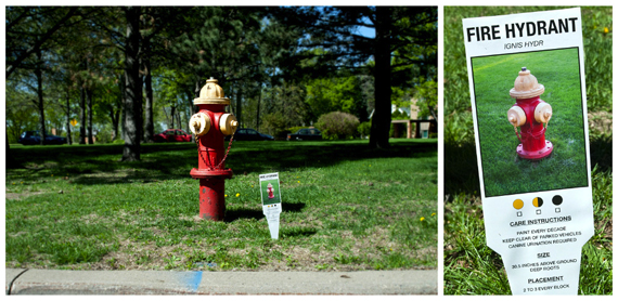 """Carmichael Collective"" ""urban art"" ""plant tags"" hydrant"